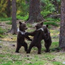 Подари медвежаток