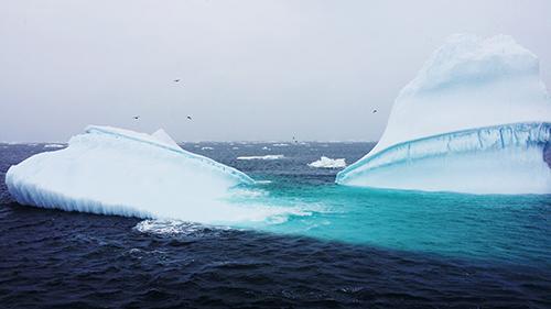 Моя Антарктика